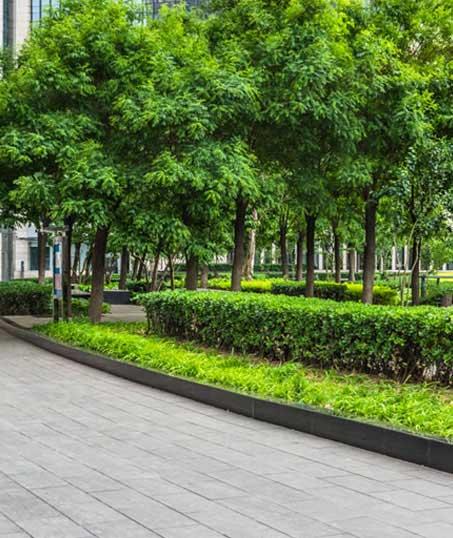 Nunez Lawn Care & Landscaping, Inc. Commercial Grounds Maintenance