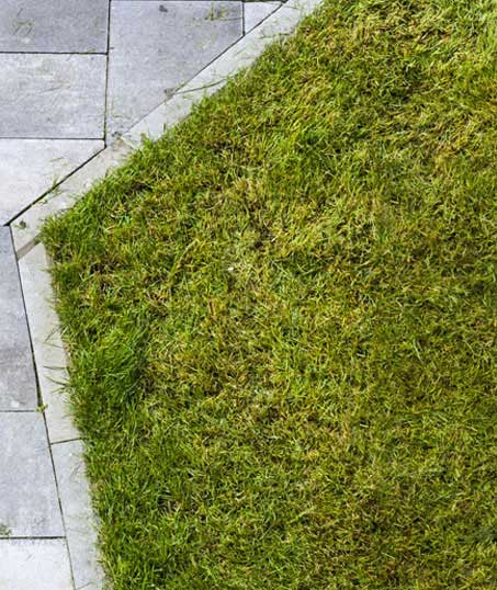 Nunez Lawn Care & Landscaping, Inc. Lawn Dethatching