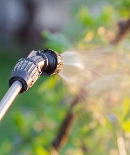 Nunez Lawn Care & Landscaping, Inc. Lawn Pest Control