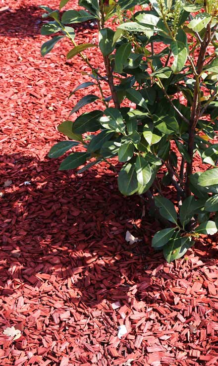 Nunez Lawn Care & Landscaping, Inc. Mulching