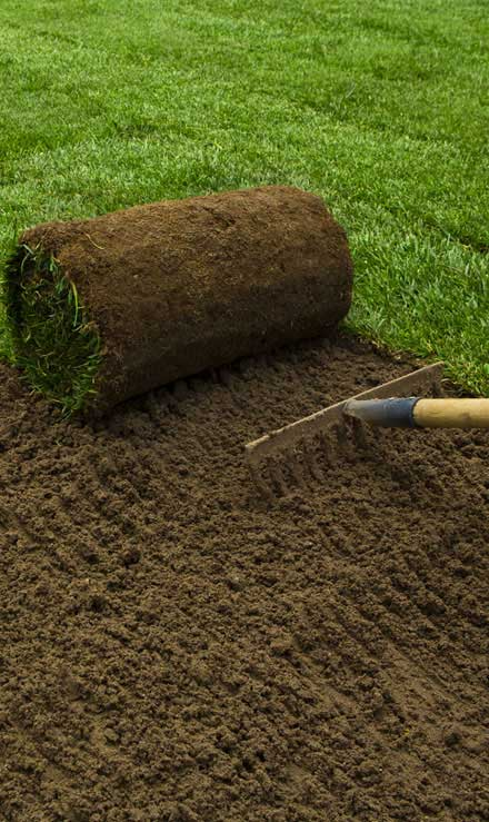 Nunez Lawn Care & Landscaping, Inc. Sod Installation