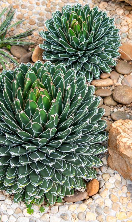 Nunez Lawn Care & Landscaping, Inc. Xeriscaping